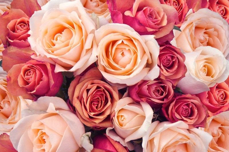 fiori-per-la-festa-della-mamma